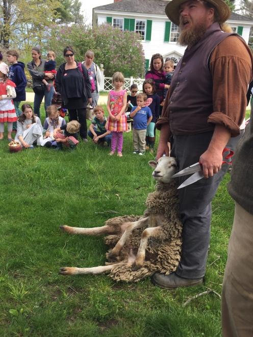 a man shears a sheep